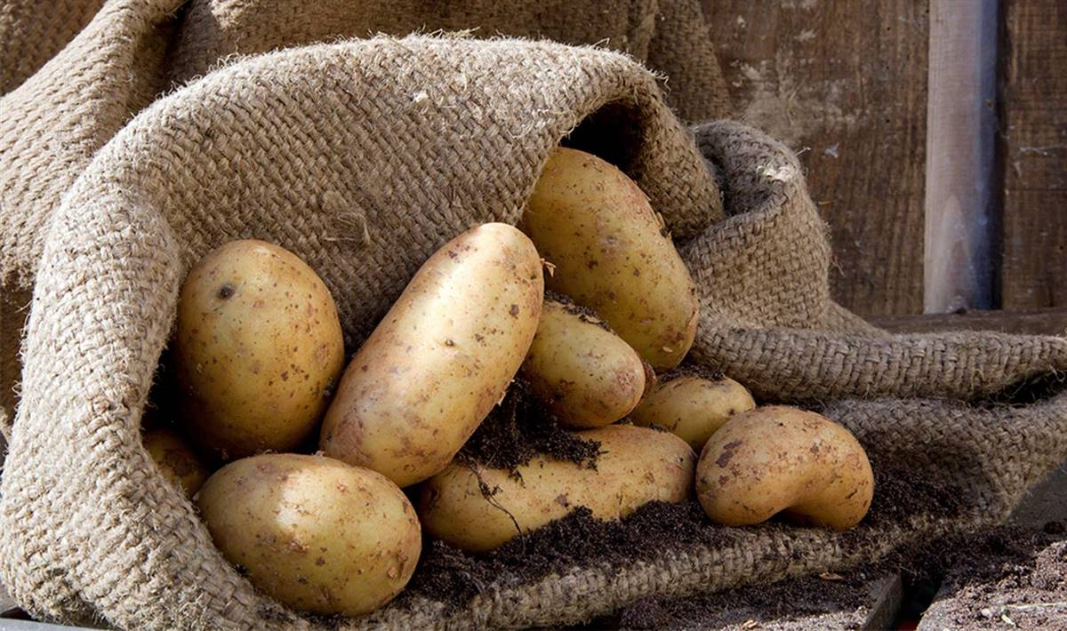 patatas 2. Patatas